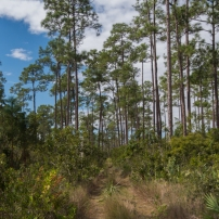 Long Pine Key